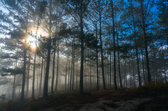 Morning in Fogging pine forest and the sun at Dalat- Vietnam. Sunrises somwhere near Dalat city - in Dalat- VietNam- LamDong- VietNam stock photography