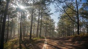 Morning in Fogging pine forest and the sun at Rays Dalat- Vietnam. Sunrises somwhere near Dalat city - in Dalat- VietNam- LamDong- VietNam stock images