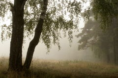 Morning foggy Royalty Free Stock Photo
