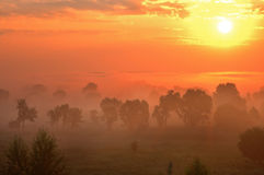 Morning foggy. Sunrise in a valley Stock Image