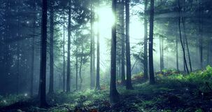 Morning foggy forest with fireflies movement stock video footage