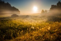 Morning on foggy meadow landscape Royalty Free Stock Photography