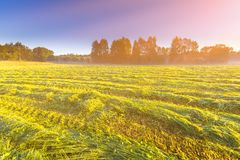 Morning foggy meadow landscape in polish countryside Stock Images