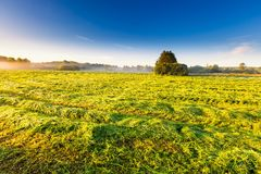 Morning foggy meadow landscape in polish countryside Stock Photography