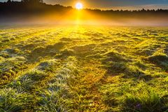 Morning foggy meadow landscape in polish countryside Royalty Free Stock Photo