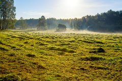 Morning foggy meadow landscape in polish countryside Royalty Free Stock Images
