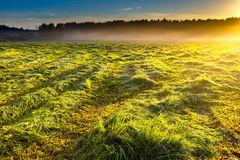 Morning foggy meadow landscape in polish countryside Stock Image