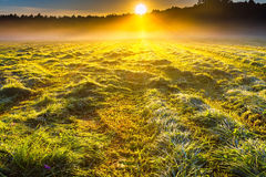 Morning foggy meadow landscape in polish countryside Stock Photos