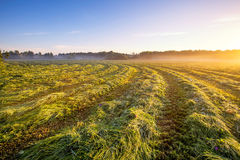 Morning foggy meadow landscape in polish countryside Royalty Free Stock Photos