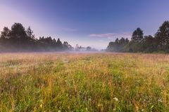 Morning foggy meadow in polish countryside Royalty Free Stock Photography