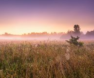 Morning foggy meadow in polish countryside Stock Photography