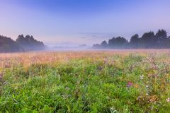Morning foggy meadow in polish countryside Stock Image