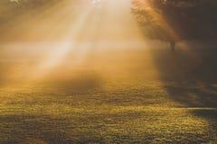 Morning Foggy Sunlight Stock Photos