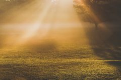 Morning foggy sunlight Stock Photos