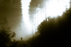 Morning forest. Morning at foggy forest with a silhouette of a man with bike Royalty Free Stock Images