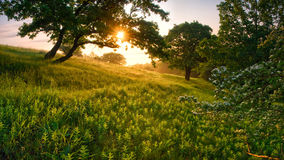 Morning in the forest Royalty Free Stock Photo