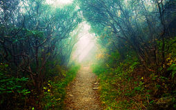 Morning forest. With sun beams onto pathway Royalty Free Stock Photo
