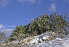 Morning forest. Green forest under blue sky in winter Royalty Free Stock Photos
