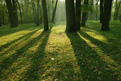 Morning in forest Royalty Free Stock Images