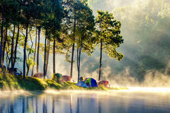 Morning in forest Royalty Free Stock Photography