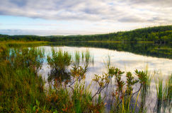 Morning at forest lake Stock Image