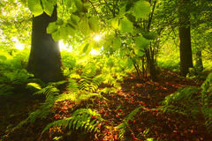 Morning forest light Stock Photos