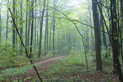 Magical forest from fable. Morning forest from magical fable stock photo