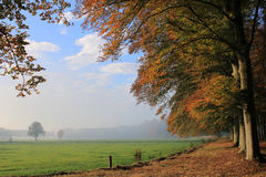 Morning in forest and meadow in autumn with coloured leaves Royalty Free Stock Images
