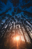 Morning Forest in November. Morning forest at dawn in the long term Royalty Free Stock Photography