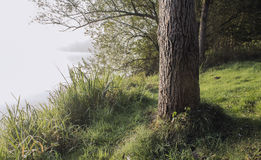 Morning forest. Forest part on a foggy morning while a sunrise Royalty Free Stock Photos