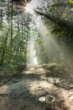 Morning forest path with sunbeams Stock Images