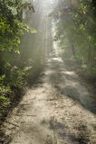 Morning forest path with sunbeams Stock Photography