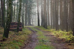 Morning in the forest. Stock Photography