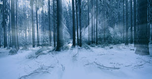 Morning in the forest Royalty Free Stock Photography