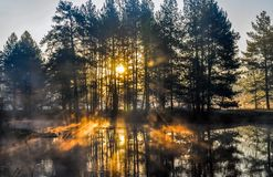 Morning in forest with sun rays and a fog from the river stock photo