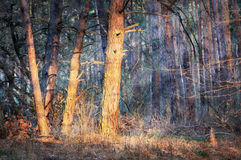 Morning in forest Stock Images