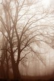 Morning forest in thick fog stock photos