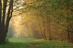 Morning Forest Walk Royalty Free Stock Photos