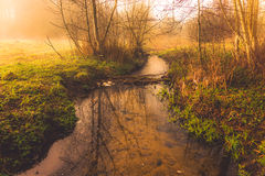 morning forest and water stream Royalty Free Stock Images