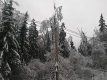 Morning after freezing rain. Balabanovo, Pushkinskiy rayon, Russia – November 12, 2016: Morning after freezing rain, trees and electrical wires shackled by ice Royalty Free Stock Photo