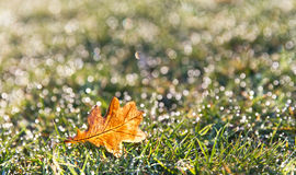 Morning fresh dew de-focused in and autumn leaf. Spring dew defocused and one single autumn leaf Stock Images