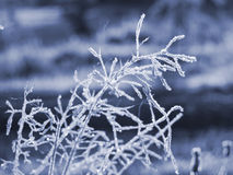 Morning Frost Royalty Free Stock Photos