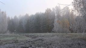 Morning frost in the forest, foggy october morning. Morning frost in the forest a foggy october morning stock video footage
