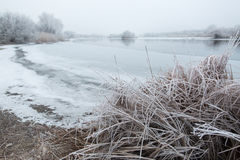 Morning frost Royalty Free Stock Photography