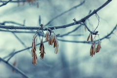 Morning froze Royalty Free Stock Images