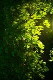 Morning Garden Stock Photo