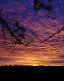 Morning Glory. A brilliant sunrise, featuring the silhouette of a large trees branches Stock Images