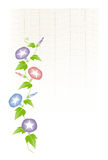 Morning glory and bamboo blind Royalty Free Stock Images