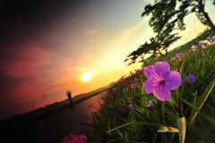 Morning glory 2 Stock Images