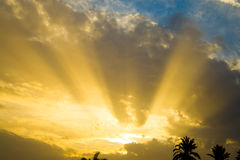 Morning Glory Over Sleeping Palms Royalty Free Stock Photos